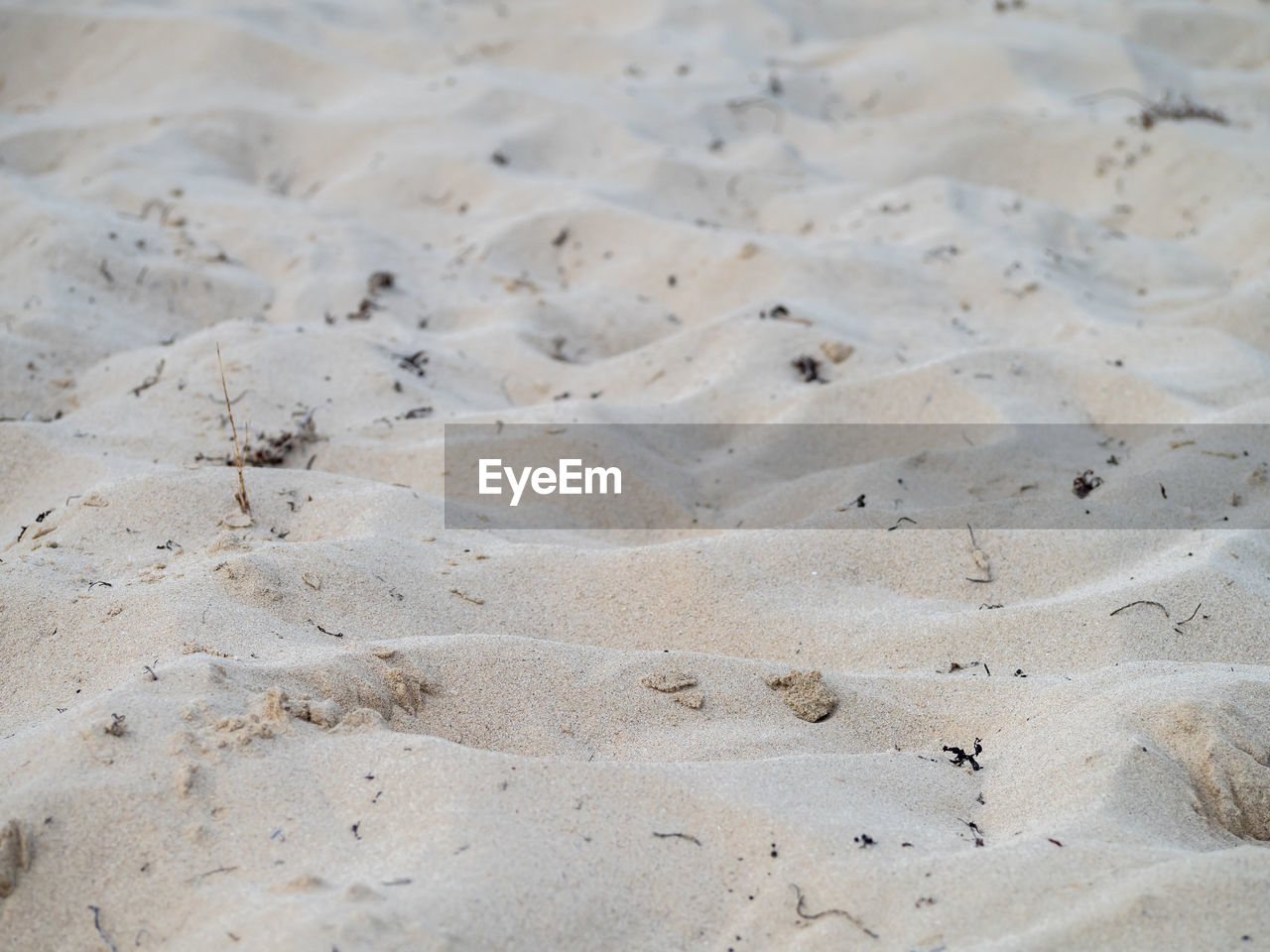 sand, land, beach, no people, backgrounds, pattern, nature, high angle view, day, full frame, tranquility, beauty in nature, close-up, outdoors, desert, textured, beige, animal wildlife, animal, sand dune, climate, arid climate