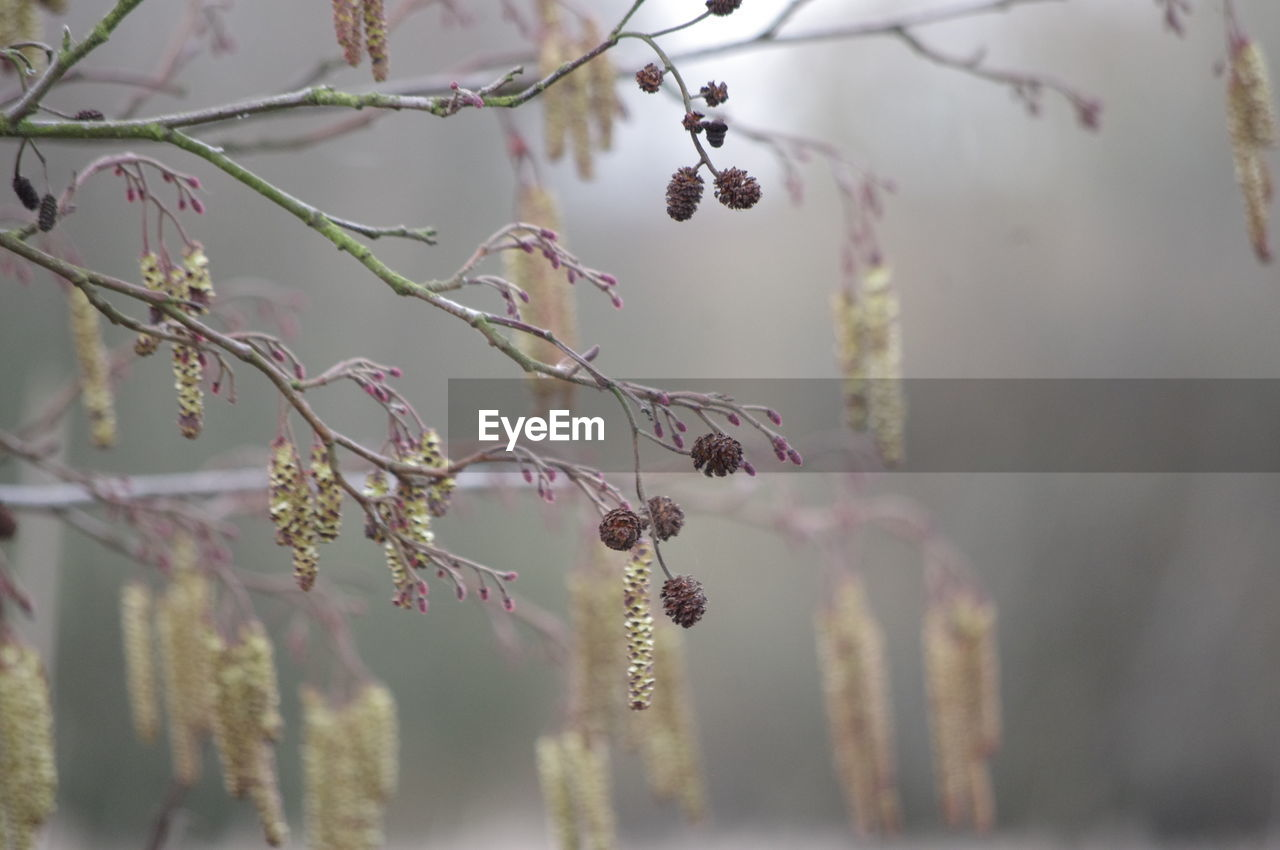 plant, beauty in nature, growth, flower, selective focus, flowering plant, nature, freshness, close-up, day, no people, vulnerability, fragility, tree, outdoors, focus on foreground, branch, botany, animal wildlife, animal themes
