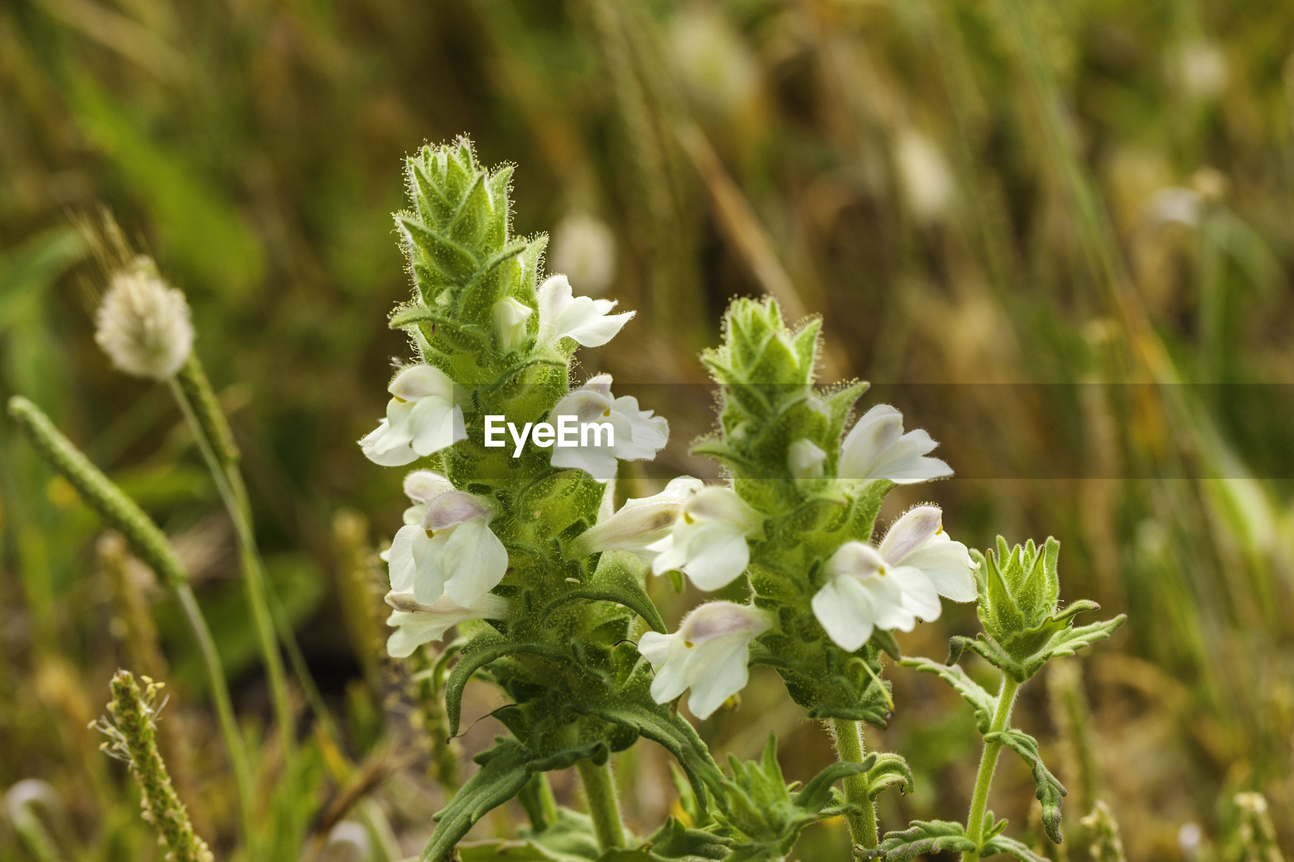 CLOSE-UP OF WHITE FLOWERING PLANTS IN SUNLIGHT
