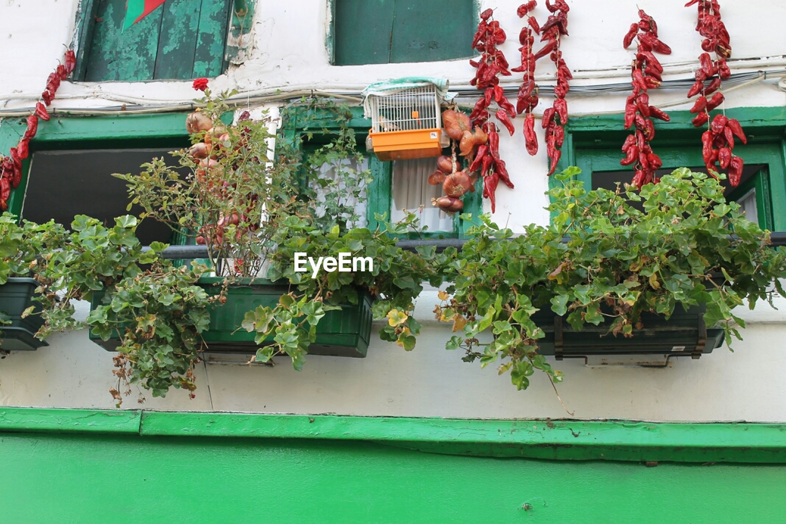 building exterior, architecture, built structure, potted plant, house, window, plant, growth, residential structure, residential building, balcony, flower, low angle view, day, tree, no people, building, flower pot, wall, wall - building feature