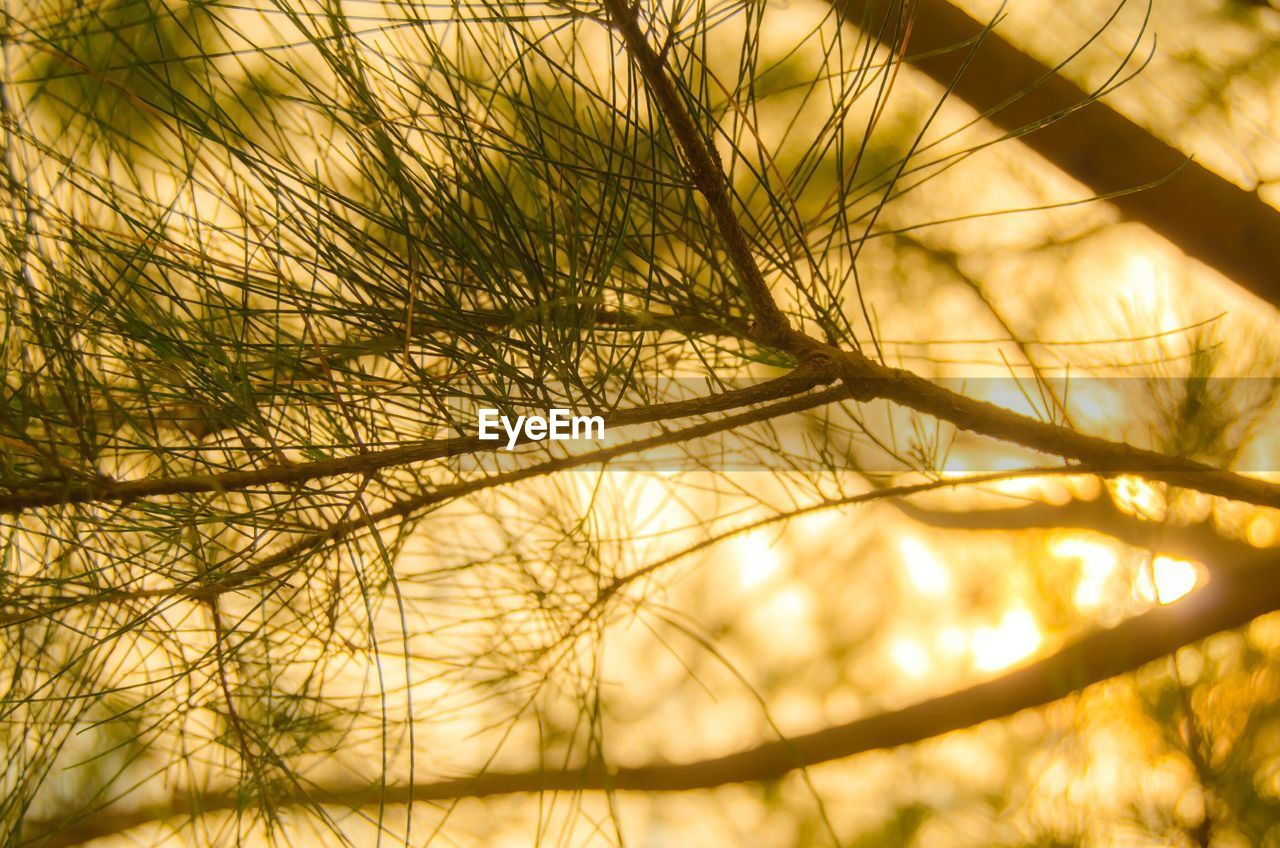 nature, grass, growth, no people, tranquility, day, outdoors, close-up, beauty in nature