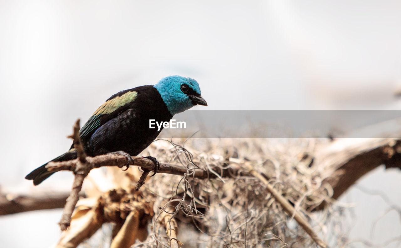 Close-up of bird perching on plant stem