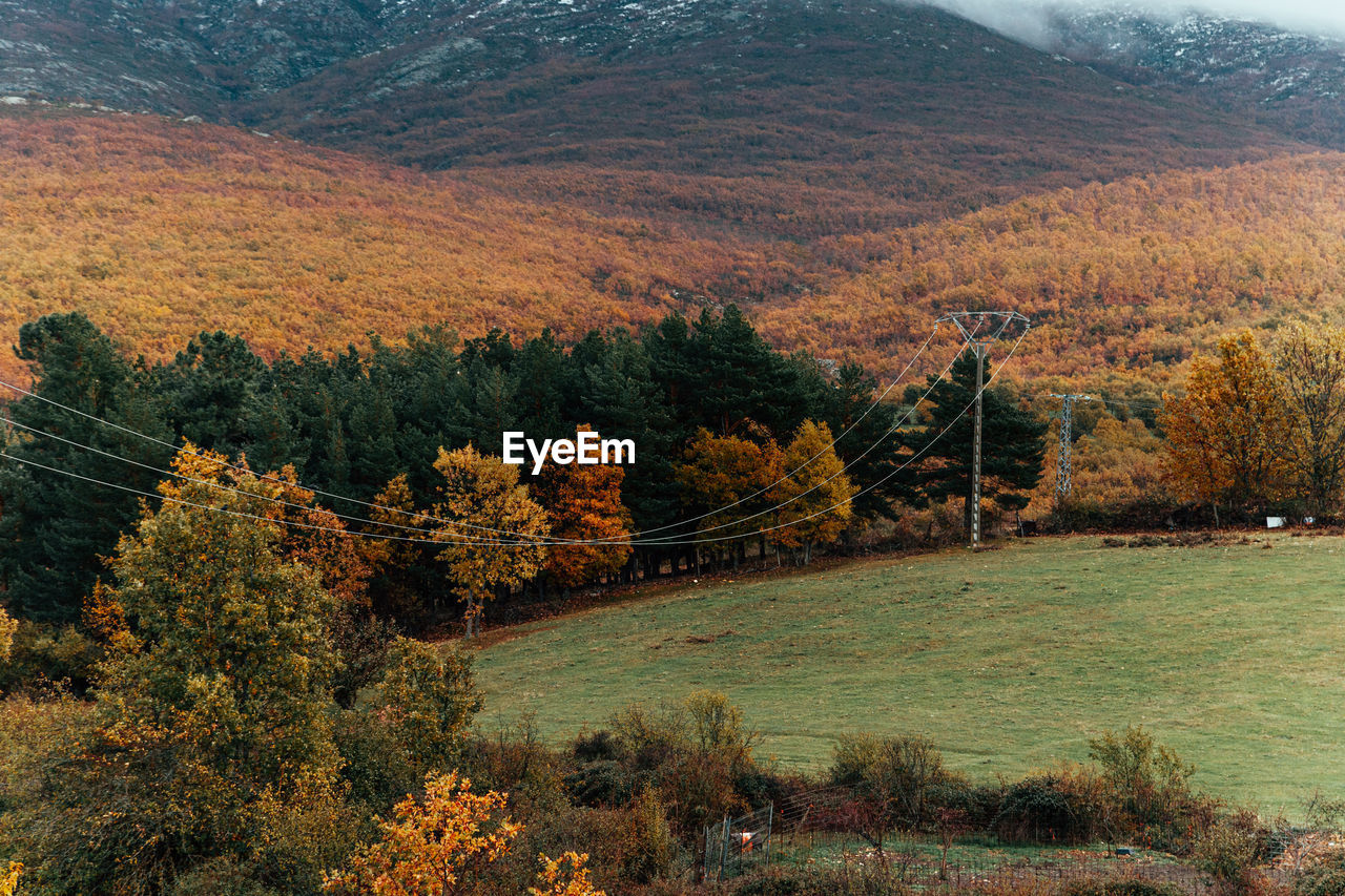 High angle view of trees on mountain during autumn