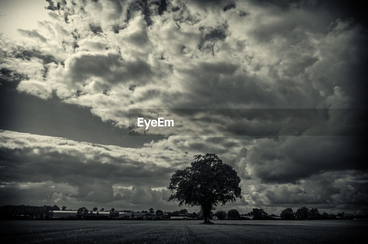 tree, tranquility, landscape, tranquil scene, cloud - sky, nature, beauty in nature, field, sky, scenics, no people, outdoors, day, storm cloud