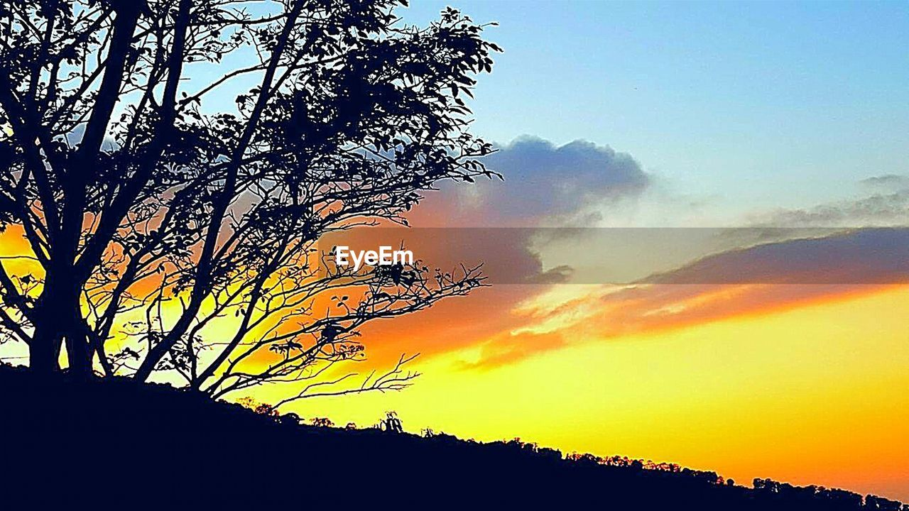 sunset, tree, sky, silhouette, plant, beauty in nature, scenics - nature, tranquility, tranquil scene, nature, cloud - sky, low angle view, no people, growth, idyllic, orange color, non-urban scene, outdoors, dramatic sky, branch