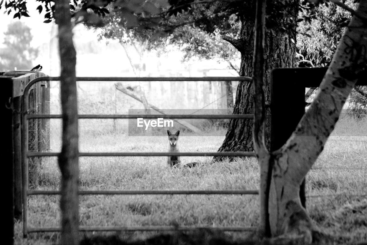 CAT LOOKING THROUGH WINDOW ON A TREE