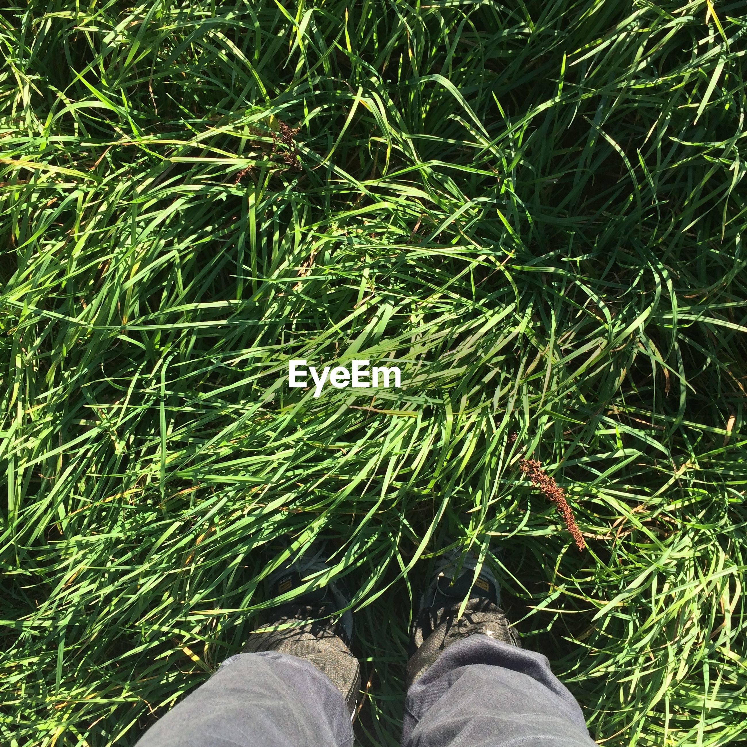 Low section of man standing amidst grassy field