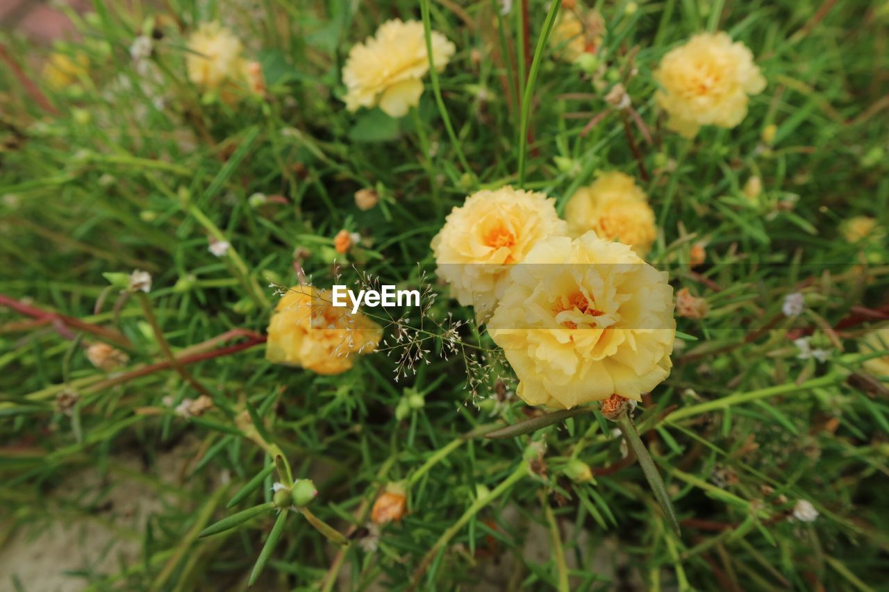 flower, growth, nature, plant, beauty in nature, petal, flower head, no people, outdoors, fragility, day, freshness, close-up, blooming, grass