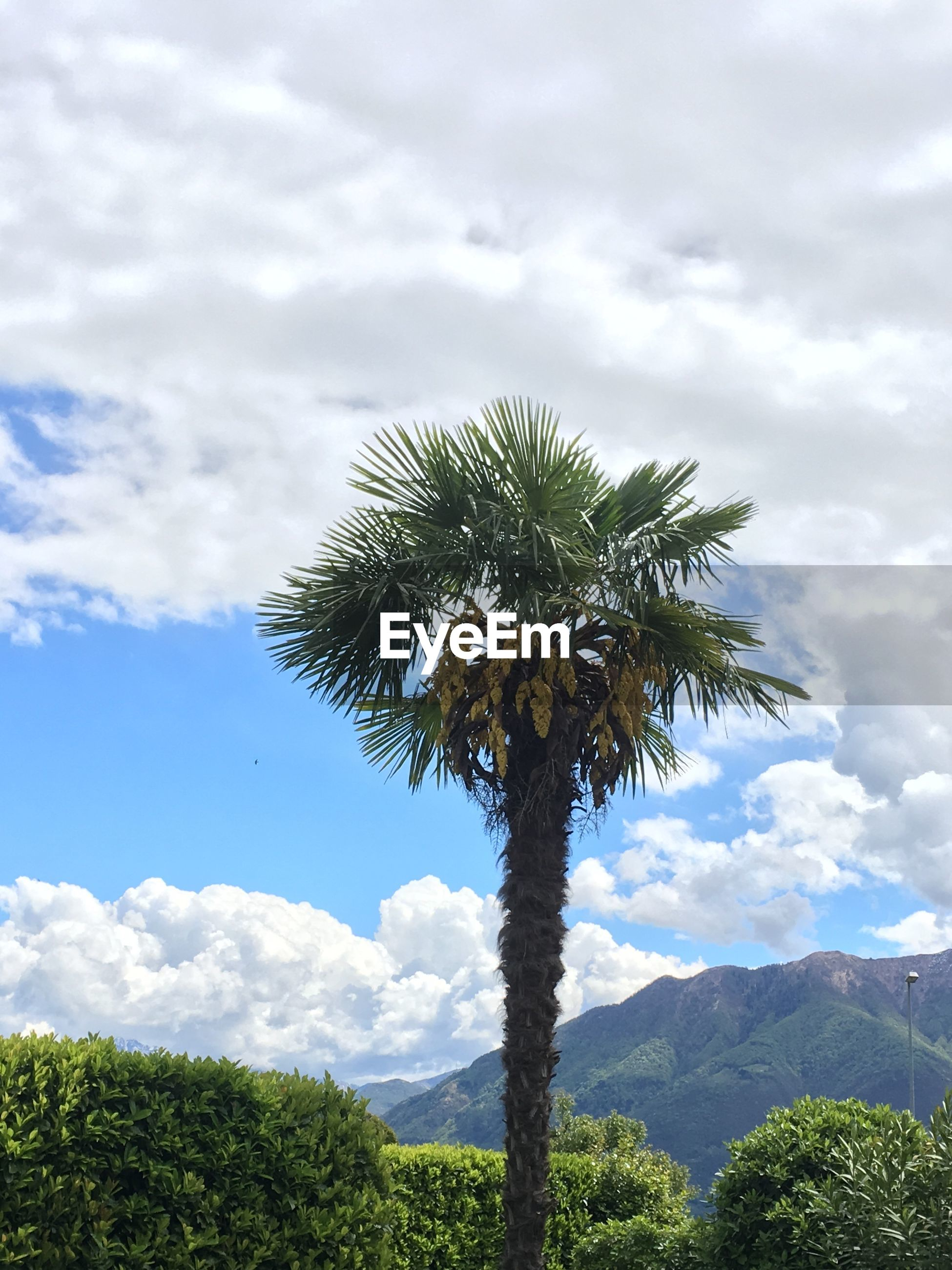 LOW ANGLE VIEW OF PALM TREE BY MOUNTAIN AGAINST SKY