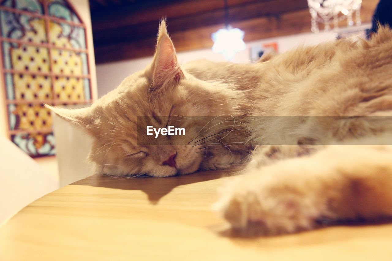 domestic, cat, pets, domestic cat, domestic animals, feline, mammal, animal themes, animal, relaxation, vertebrate, one animal, indoors, sleeping, no people, eyes closed, resting, selective focus, close-up, table, whisker, napping