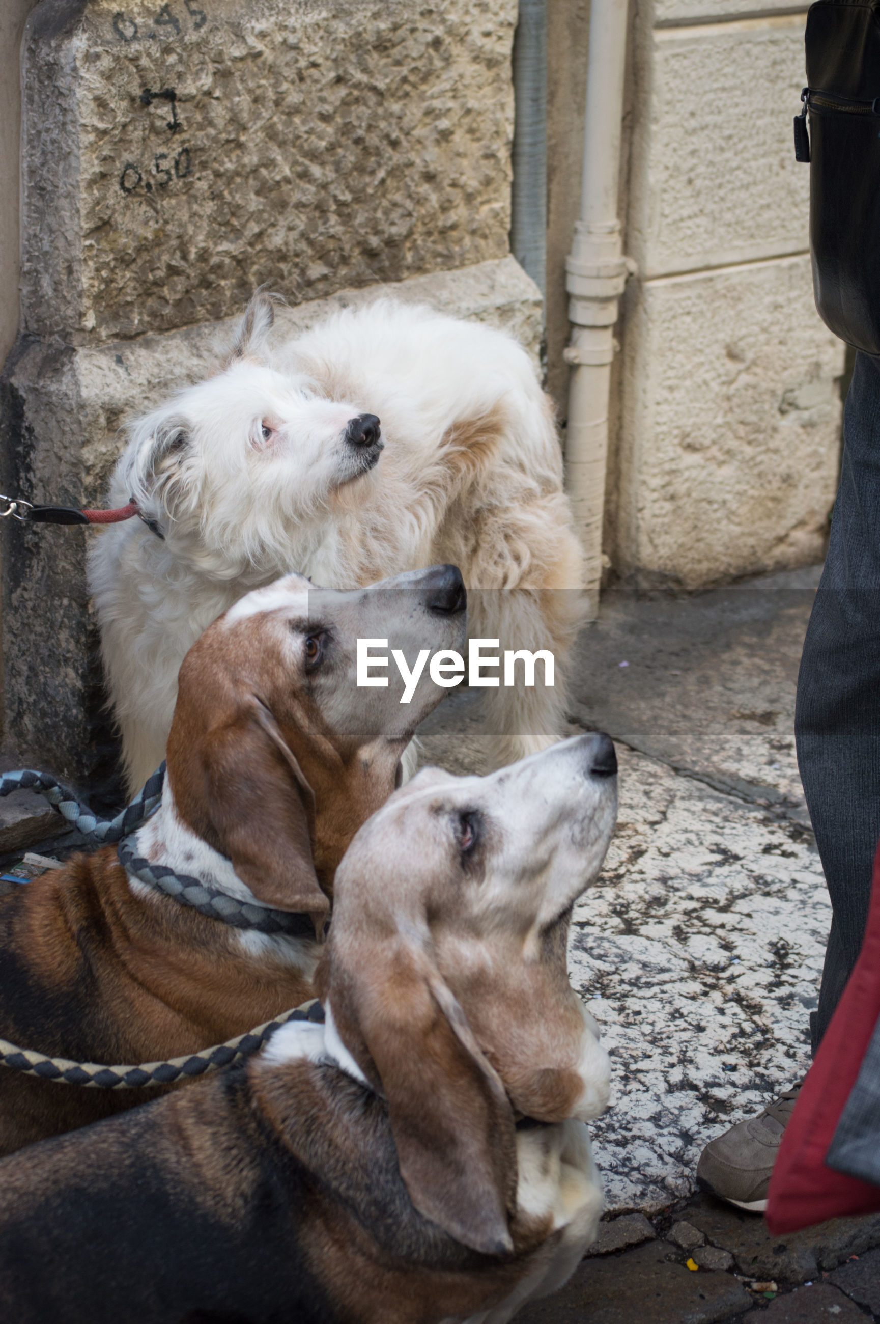 High angle view of dogs looking at man
