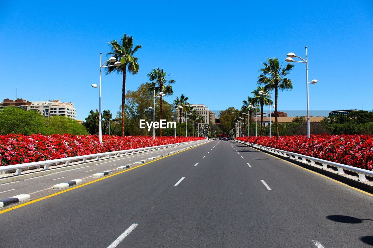 Diminishing perspective of empty road amidst palm trees against clear blue sky