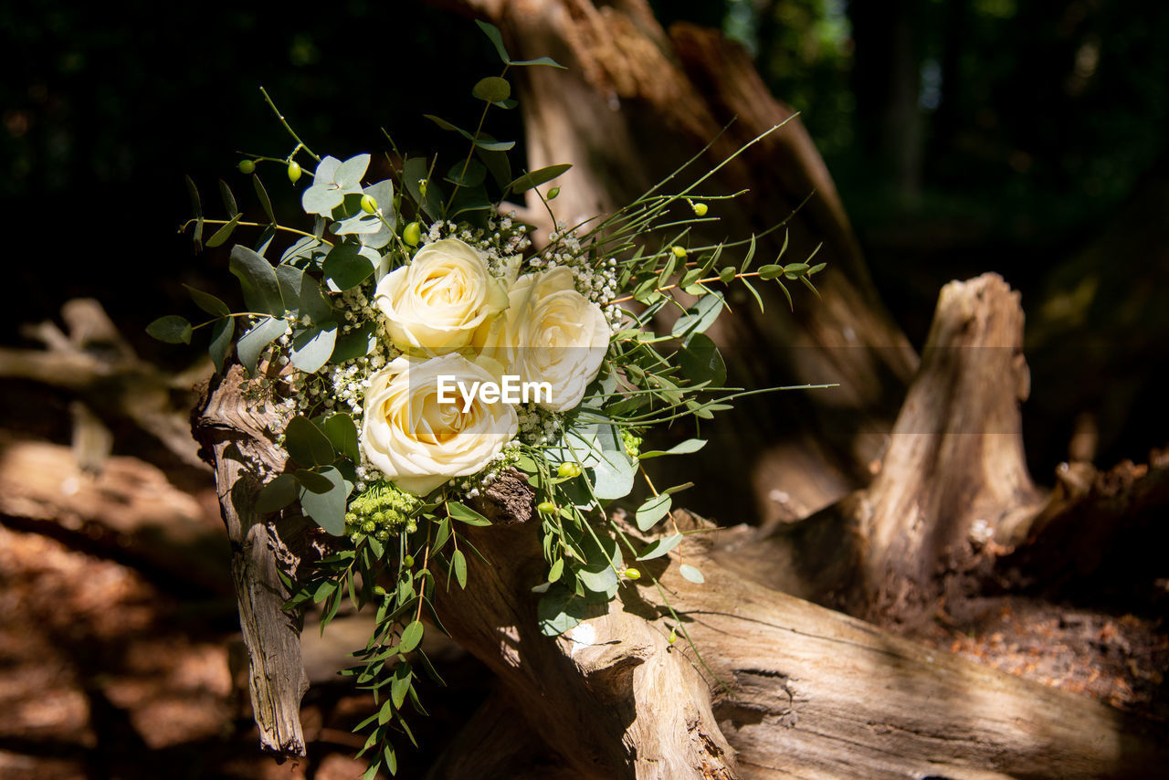 flower, flowering plant, plant, close-up, beauty in nature, vulnerability, fragility, focus on foreground, nature, freshness, flower head, petal, inflorescence, no people, day, rose, flower arrangement, white color, rose - flower, bouquet, outdoors