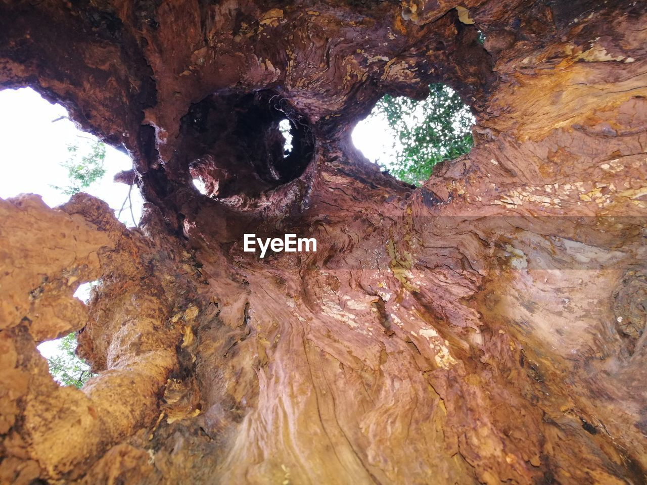 rock - object, rock formation, geology, cave, textured, nature, physical geography, beauty in nature, stalactite, rough, no people, tree trunk, day, tree, outdoors, close-up, rock face, undersea