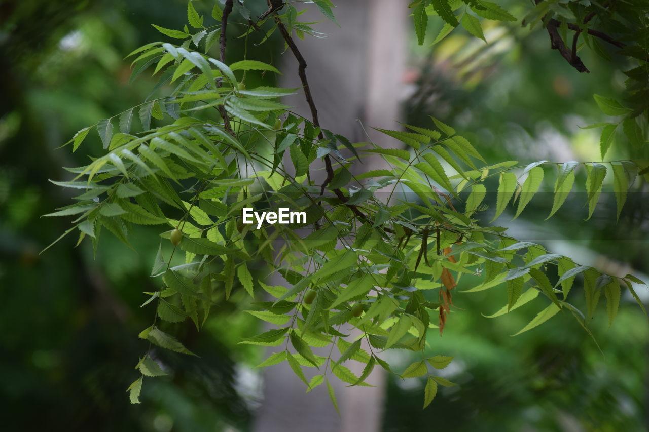 CLOSE-UP OF FRESH GREEN TREE