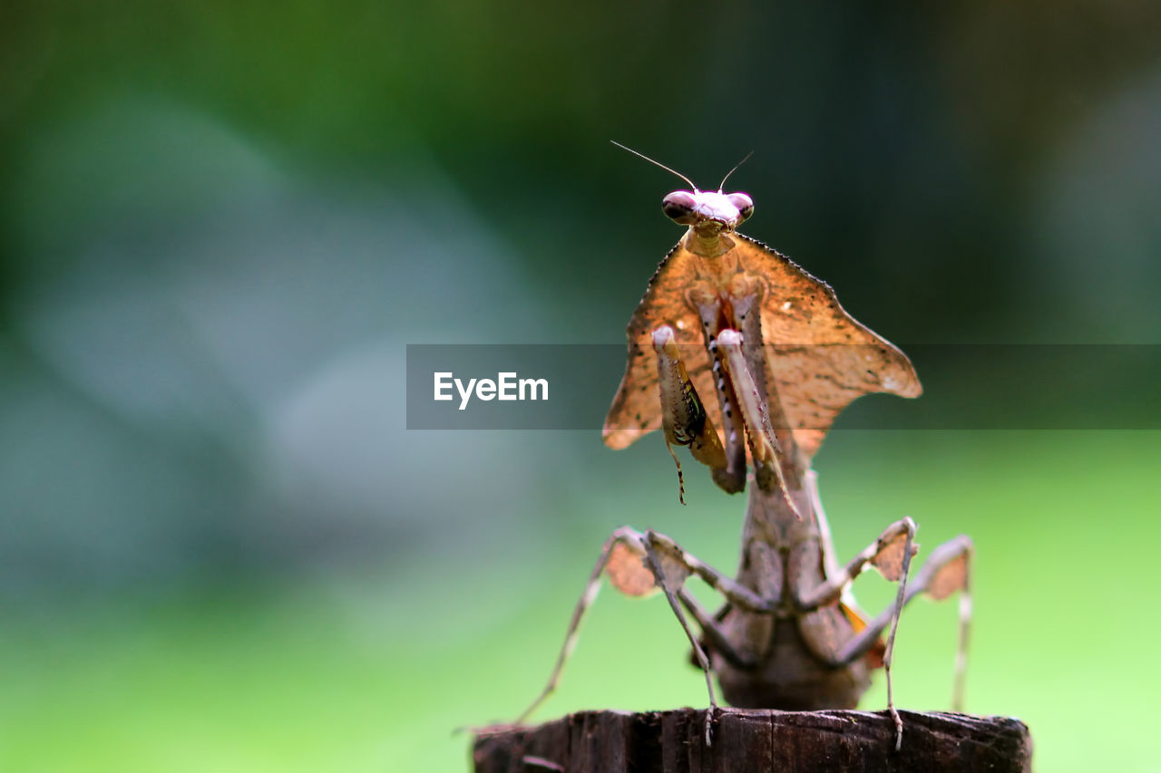 invertebrate, insect, animal, close-up, focus on foreground, animal themes, one animal, animal wildlife, animals in the wild, no people, day, nature, plant, selective focus, animal wing, outdoors, beauty in nature, green color, animal body part, plant stem