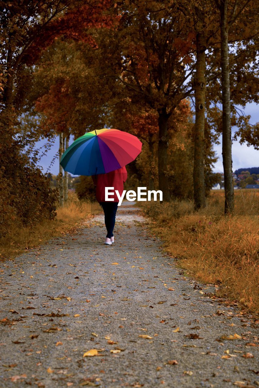 autumn, one person, tree, real people, plant, lifestyles, full length, umbrella, leisure activity, the way forward, nature, walking, day, protection, road, direction, change, transportation, outdoors, rain, rainy season