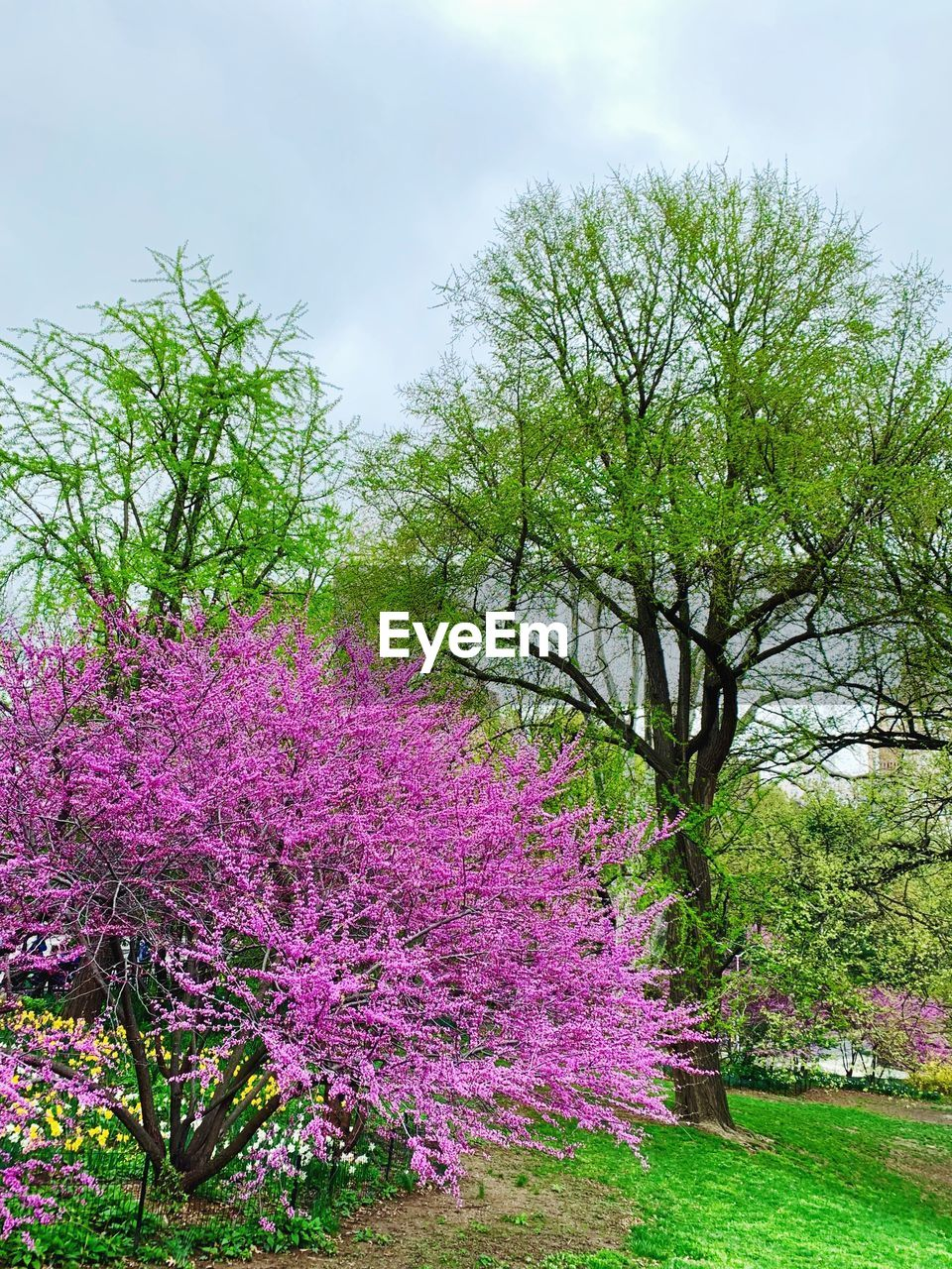 plant, flower, flowering plant, beauty in nature, tree, growth, sky, nature, freshness, no people, cloud - sky, day, pink color, tranquility, vulnerability, blossom, fragility, land, green color, purple, outdoors, springtime, flowerbed, ornamental garden