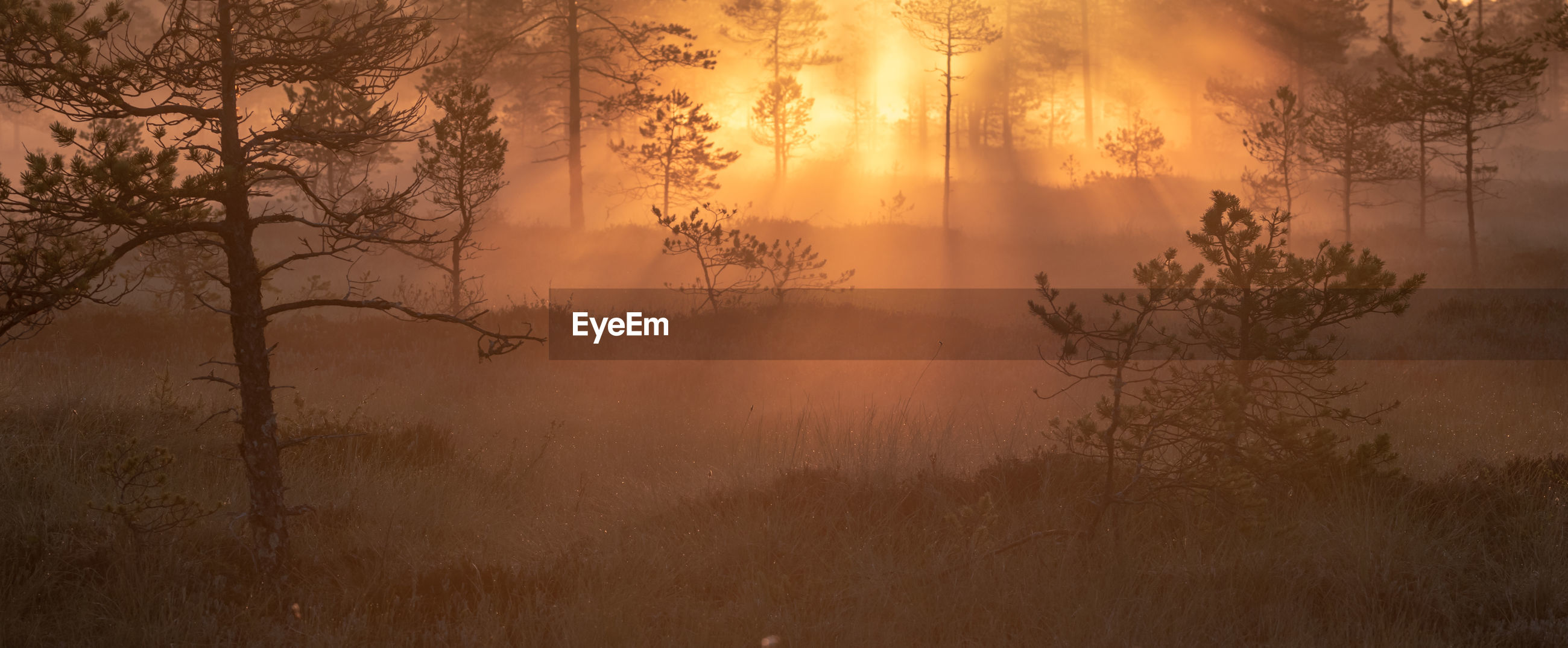 SCENIC VIEW OF FOGGY FOREST AT SUNSET