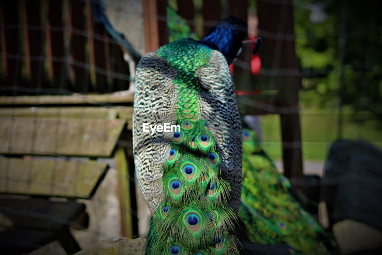 focus on foreground, animal themes, close-up, no people, animal, day, green color, vertebrate, one animal, wood - material, representation, multi colored, animal wildlife, animal representation, outdoors, nature, art and craft, selective focus, boundary, fence, animal head