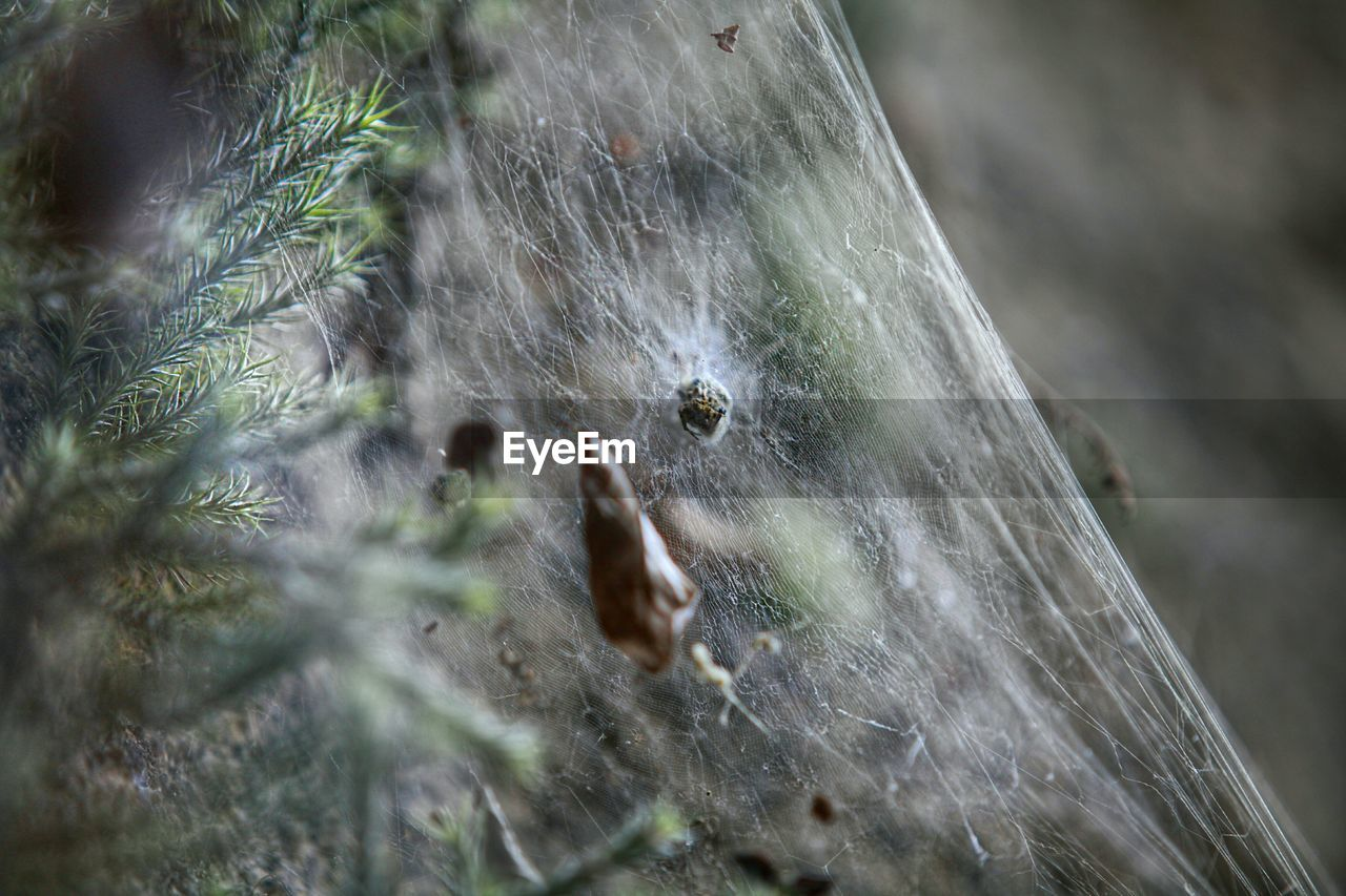 Close-up of spider web in forest