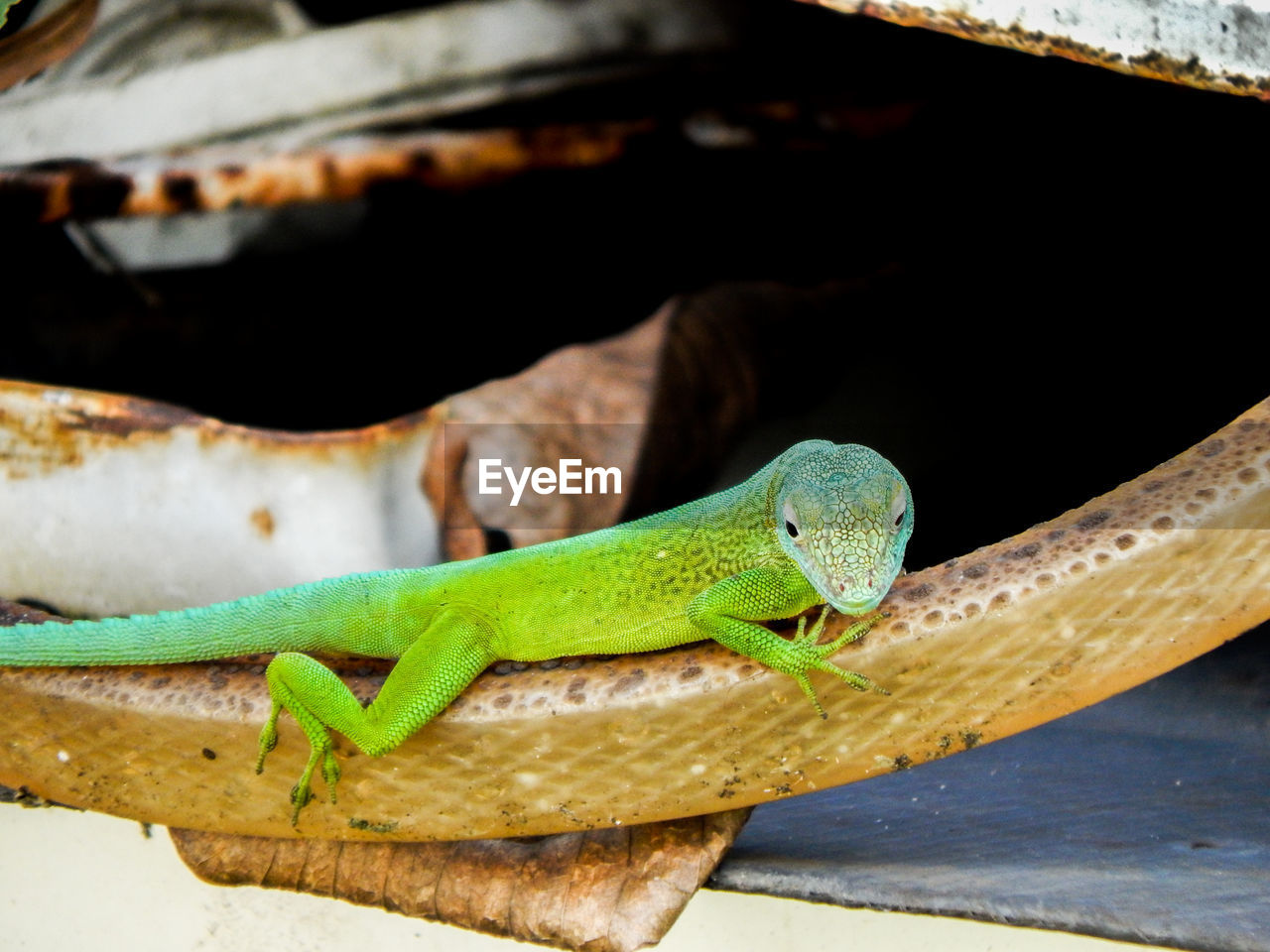 animal, animal themes, animal wildlife, one animal, vertebrate, animals in the wild, reptile, green color, lizard, close-up, no people, focus on foreground, day, nature, outdoors, wood - material, animal body part, zoology, looking away, selective focus, animal scale