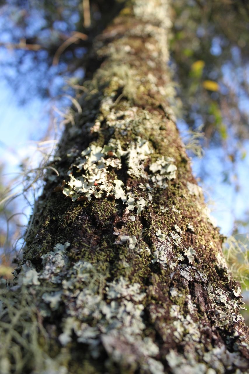 tree trunk, trunk, tree, plant, growth, textured, rough, close-up, selective focus, nature, moss, bark, day, lichen, low angle view, no people, plant bark, focus on foreground, outdoors, fungus