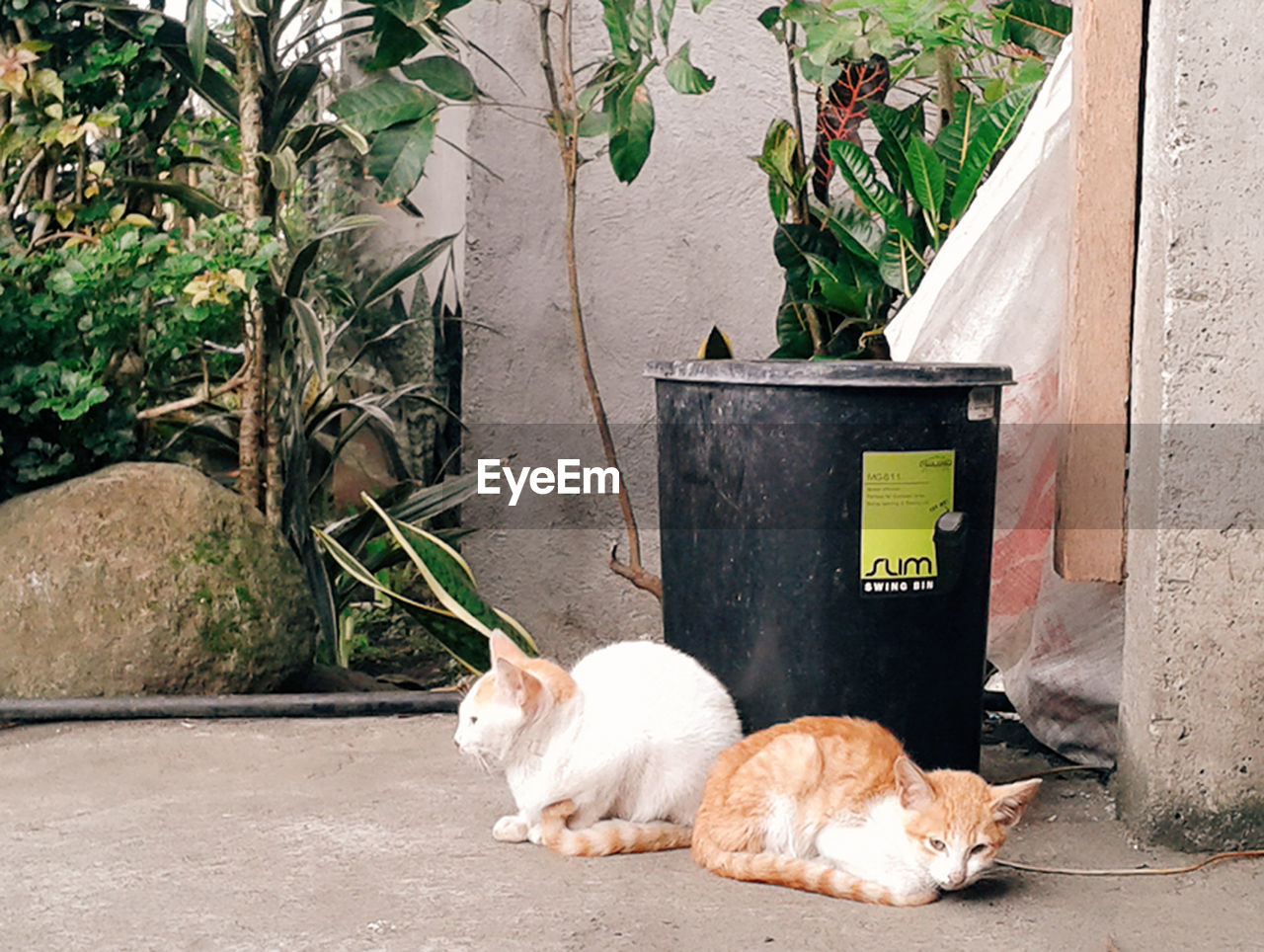 pets, domestic animals, animal themes, one animal, day, mammal, no people, domestic cat, plant, outdoors, retaining wall
