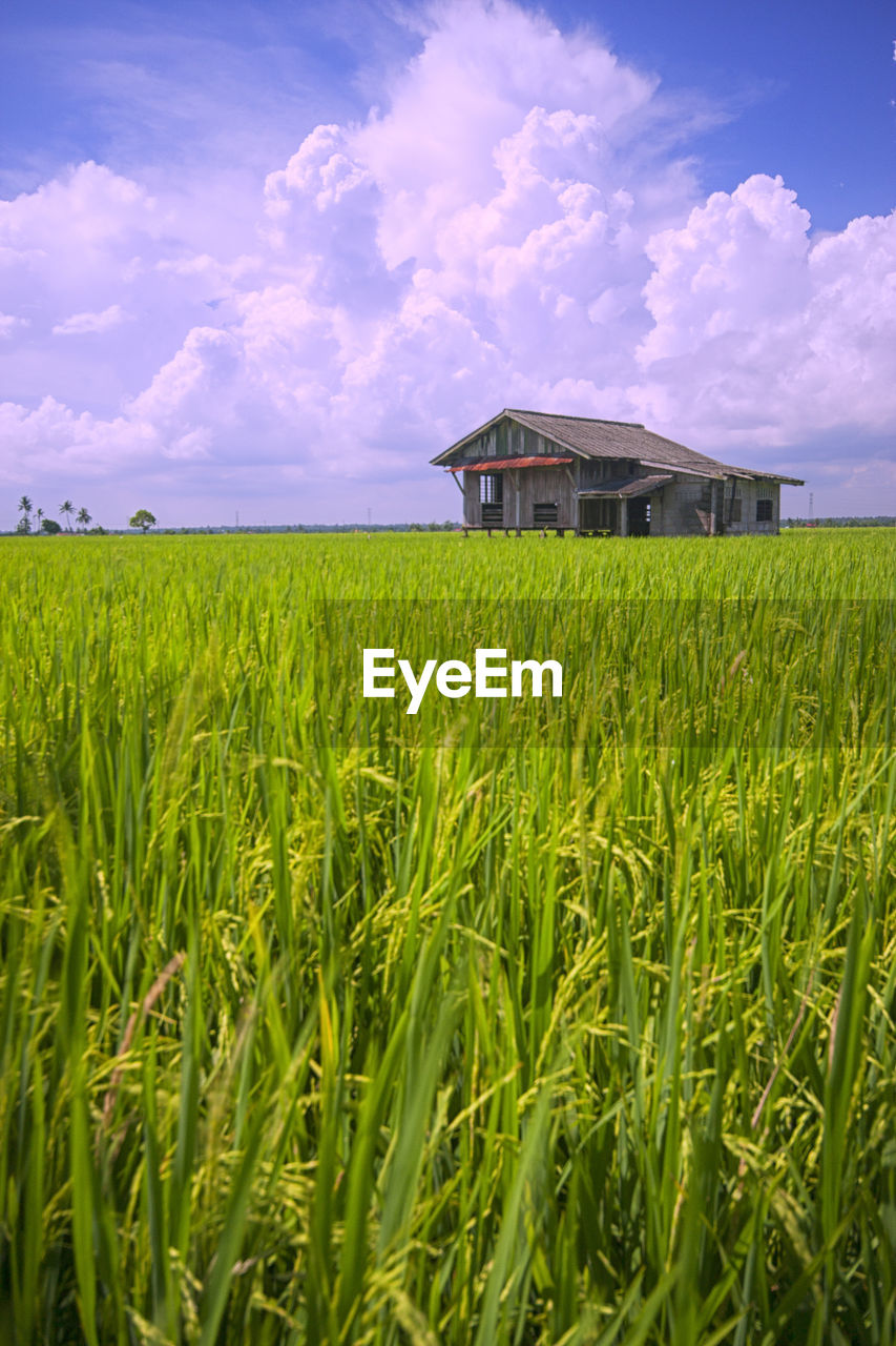 field, sky, agriculture, growth, cloud - sky, green color, farm, architecture, nature, grass, built structure, beauty in nature, outdoors, building exterior, tranquil scene, tranquility, scenics, cereal plant, rural scene, no people, day, plant, landscape