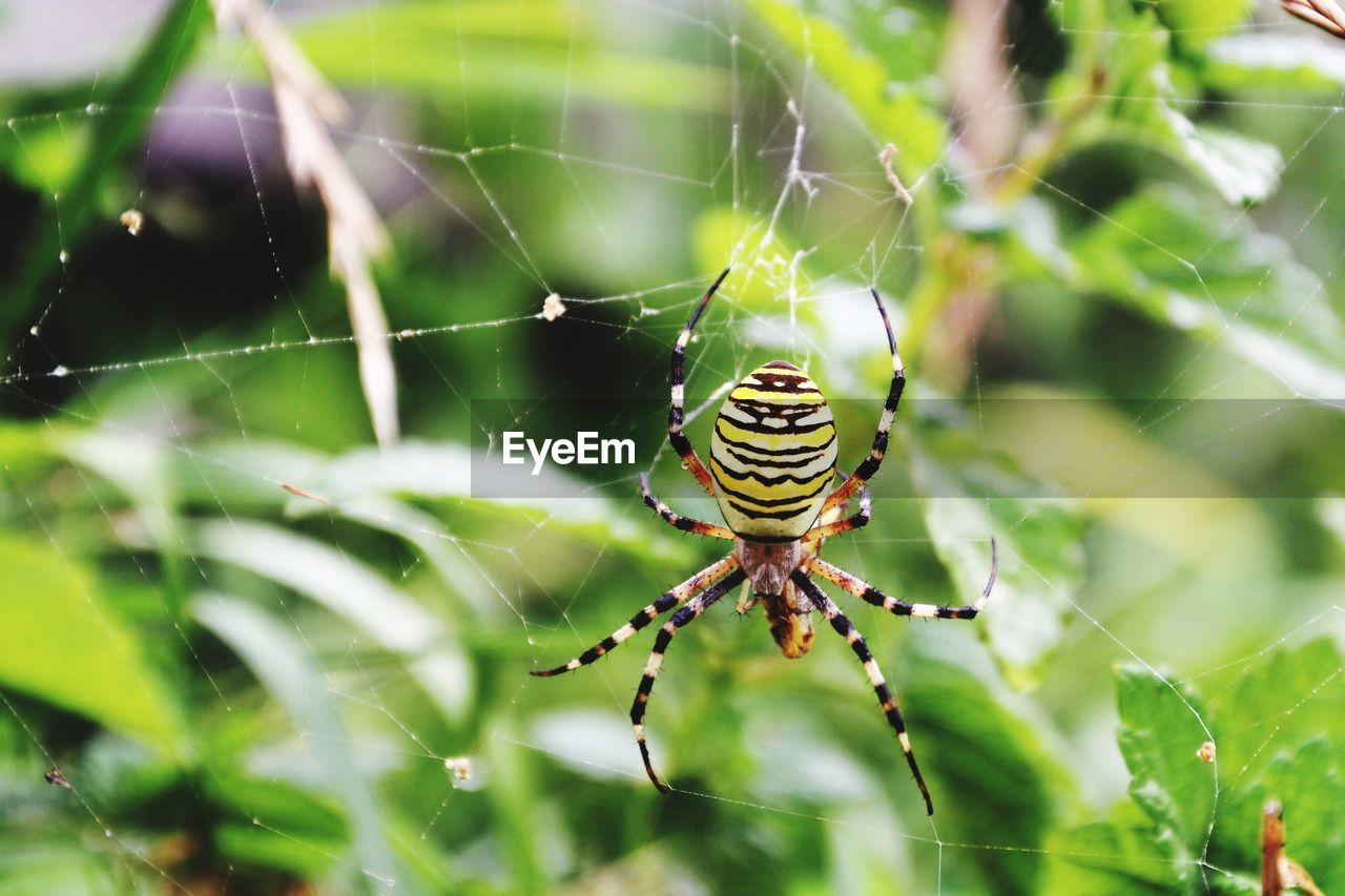 animals in the wild, animal wildlife, one animal, animal, spider web, invertebrate, spider, fragility, animal themes, arachnid, insect, arthropod, focus on foreground, close-up, day, nature, vulnerability, web, beauty in nature, survival, no people, animal leg, outdoors, complexity