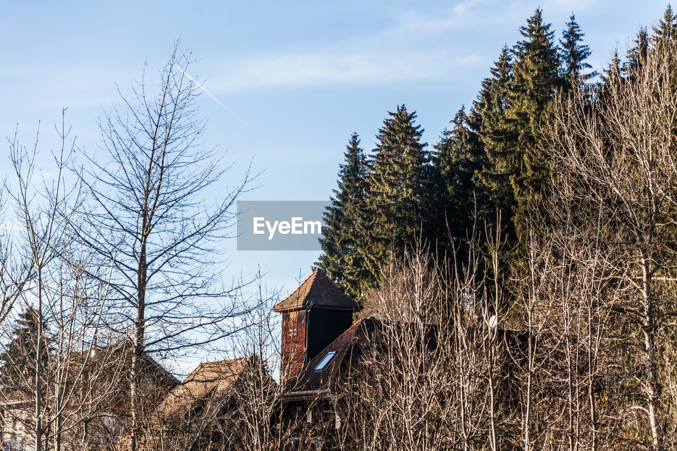 BARE TREES AGAINST HOUSE