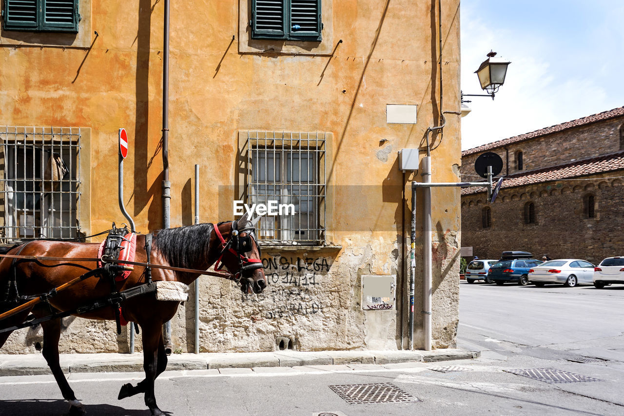 Horse On Road Against Building