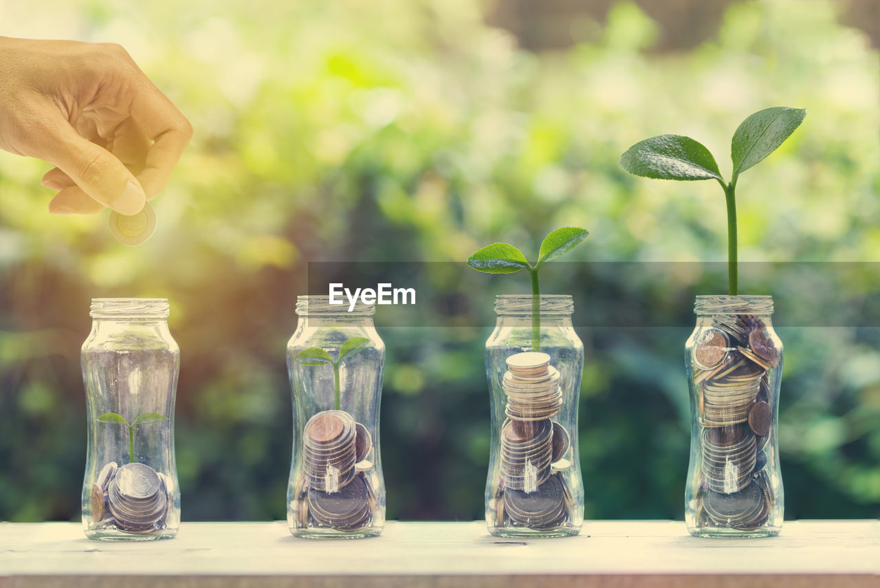Hand holding coin over glass jar with plants on table