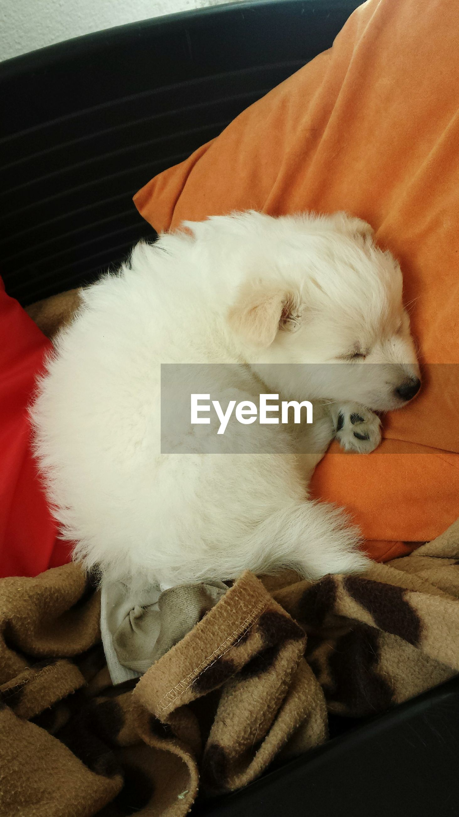 High angle view of white puppy sleeping on bed