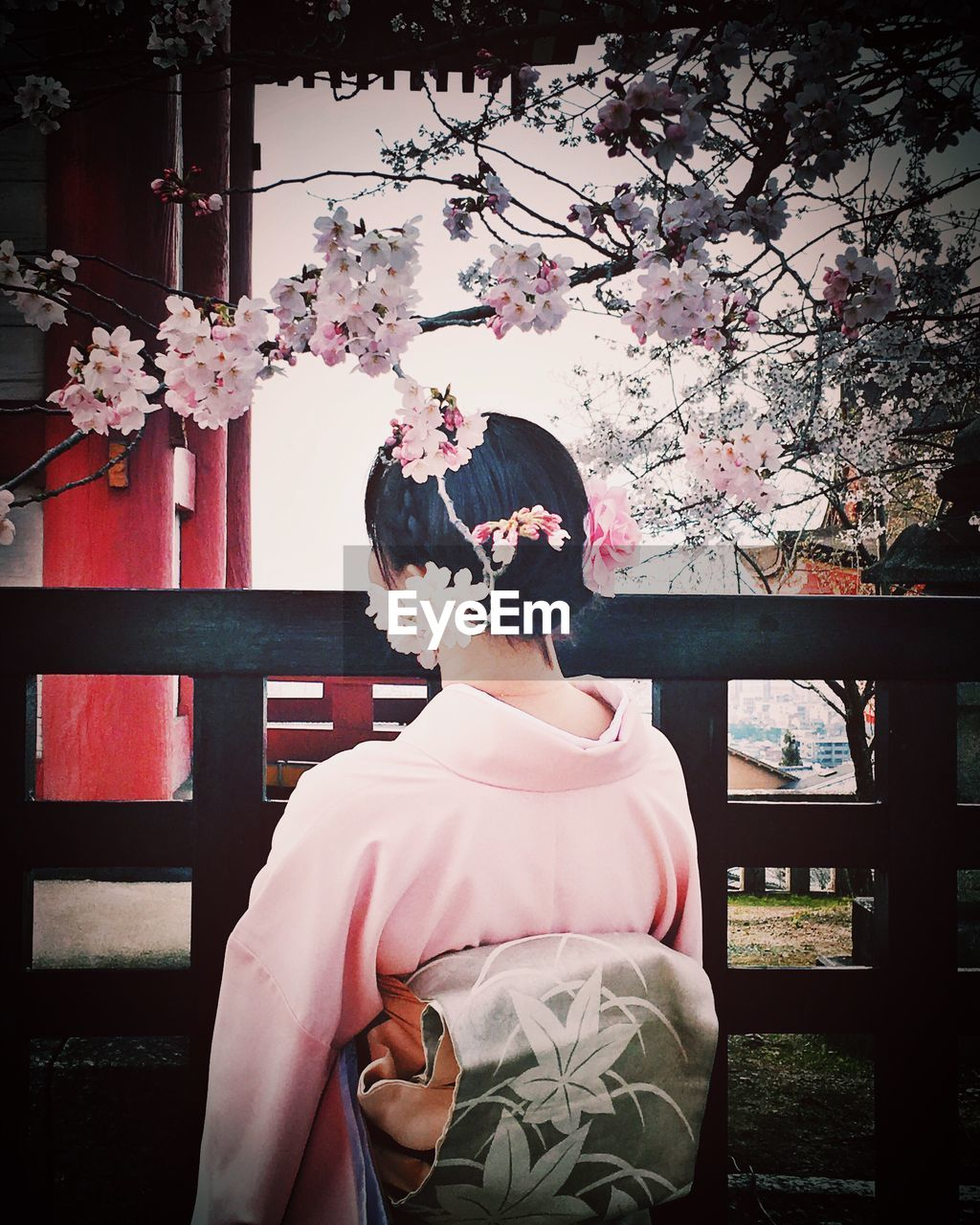 Rear View Of Japanese Woman Standing Below Cherry Tree Branches