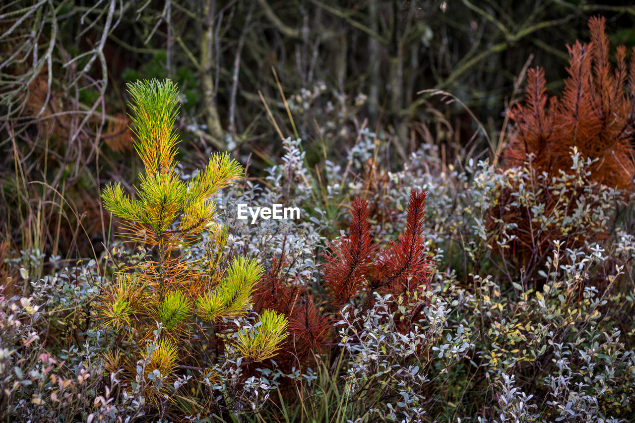 Close-Up Of Plants Growing In Forest