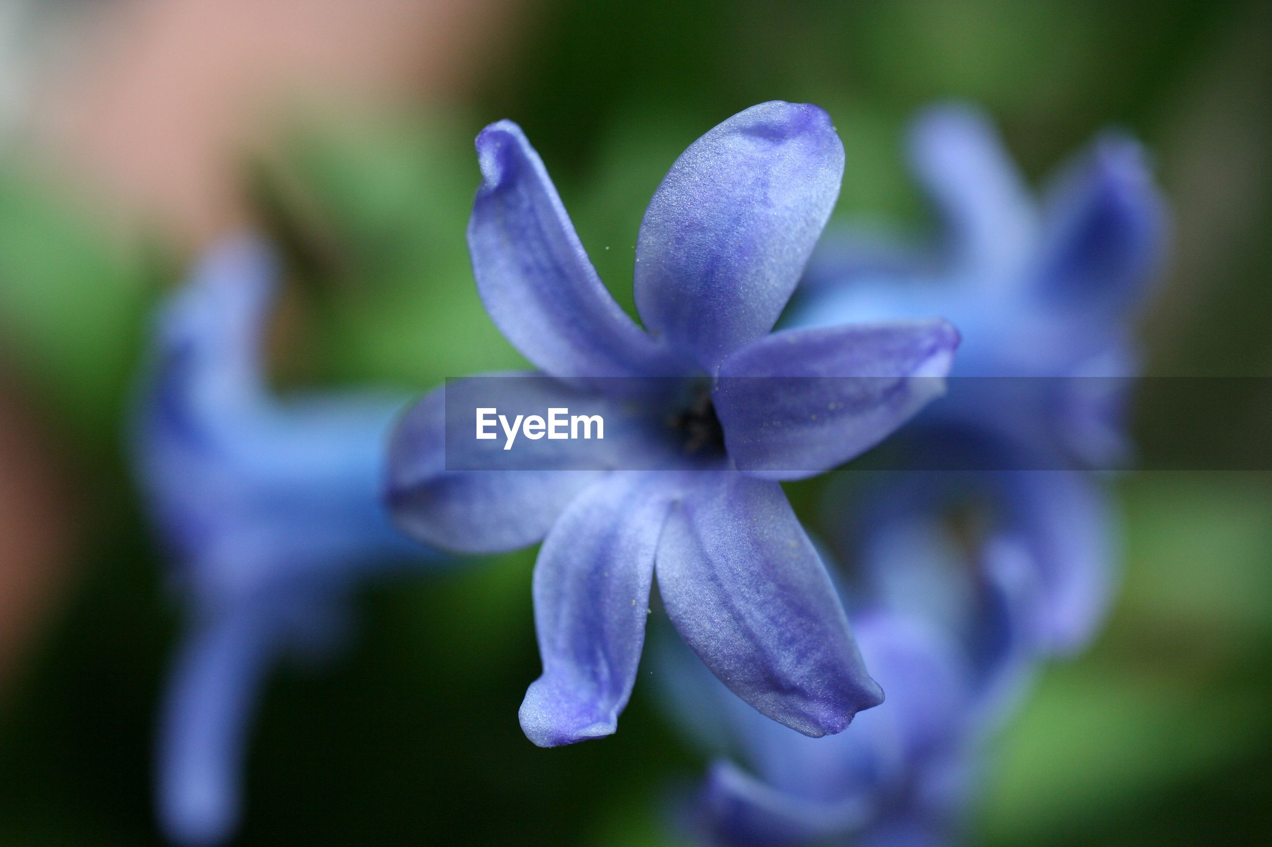 CLOSE-UP OF PURPLE FLOWER AGAINST BLURRED BACKGROUND