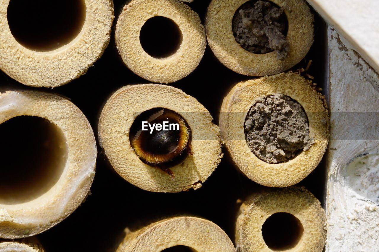 Honey Bee Depositing Honey In Honeycomb Cell
