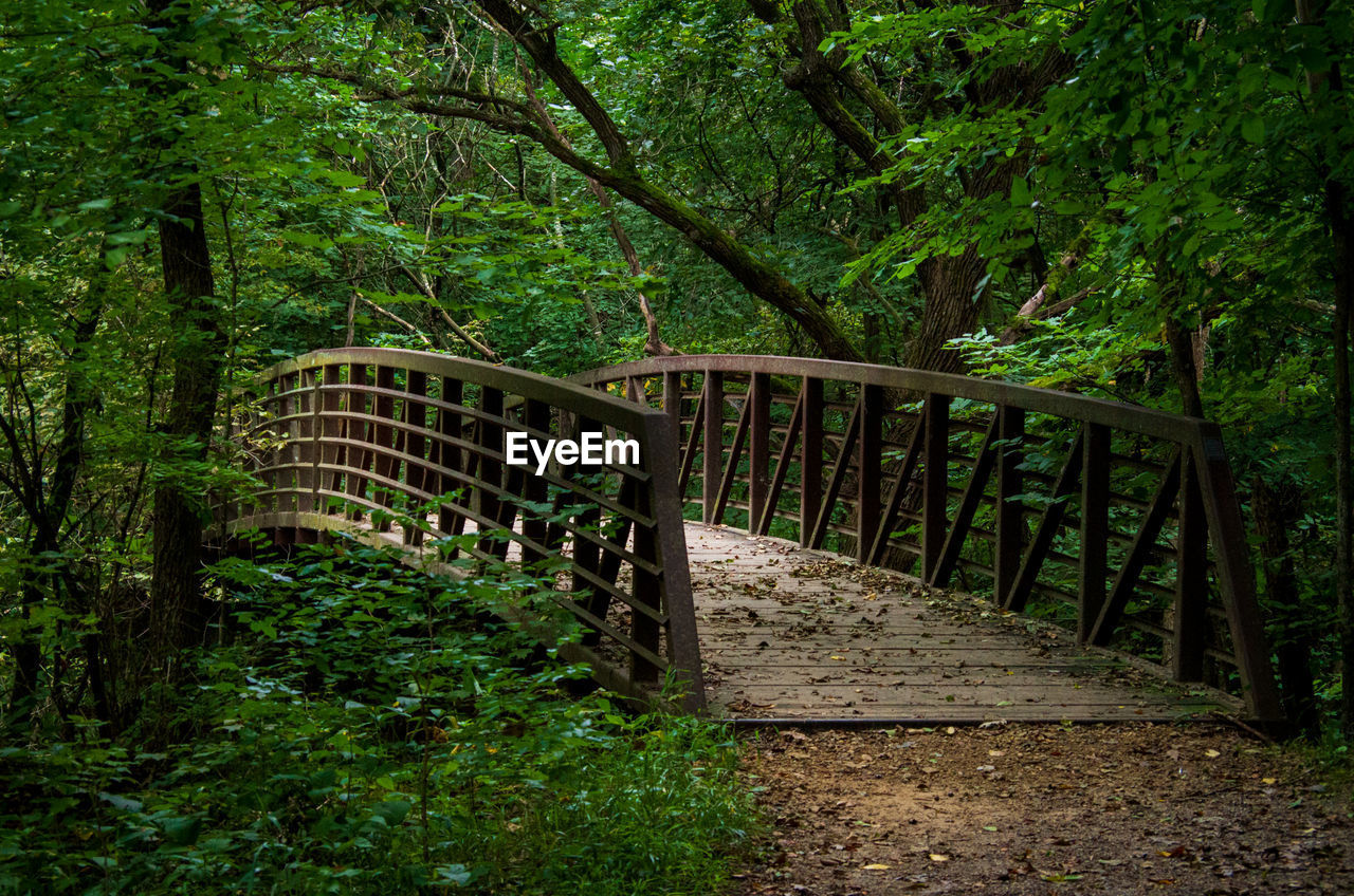 tree, plant, bridge, forest, land, connection, bridge - man made structure, railing, nature, architecture, no people, footbridge, tranquility, built structure, direction, green color, woodland, growth, day, the way forward, outdoors