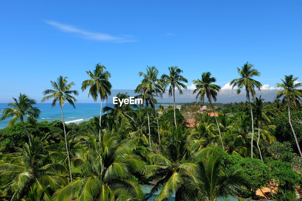 plant, sky, growth, beauty in nature, tropical climate, scenics - nature, palm tree, land, tree, tranquil scene, green color, tranquility, nature, blue, sea, environment, water, no people, foliage, day, outdoors, coconut palm tree, tropical tree