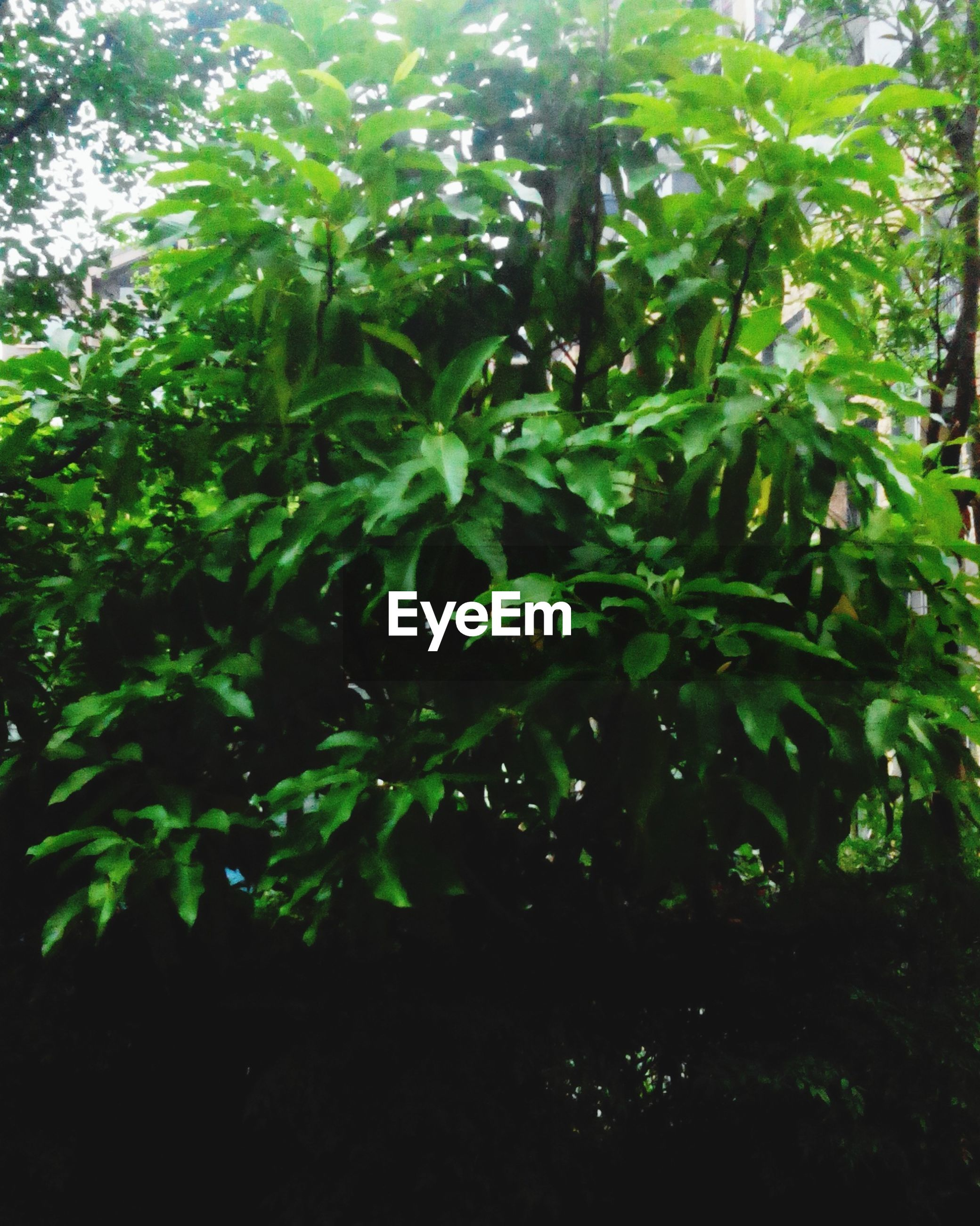growth, tree, leaf, green color, nature, branch, tranquility, beauty in nature, plant, low angle view, lush foliage, sunlight, day, outdoors, forest, no people, growing, backgrounds, full frame, green