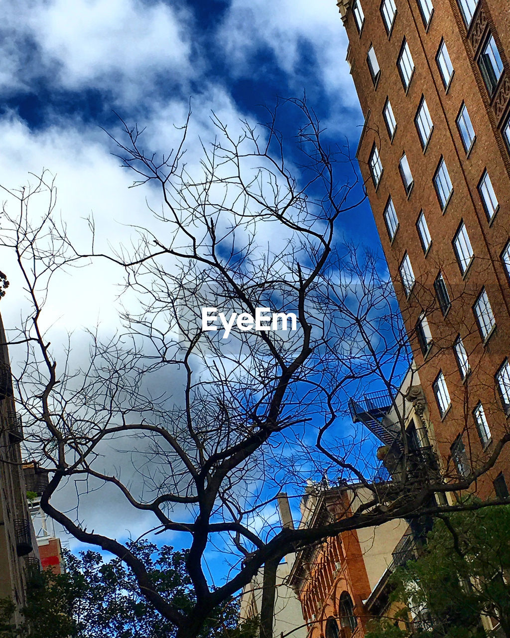 architecture, built structure, building exterior, low angle view, bare tree, sky, no people, outdoors, day, city, tree, branch, nature