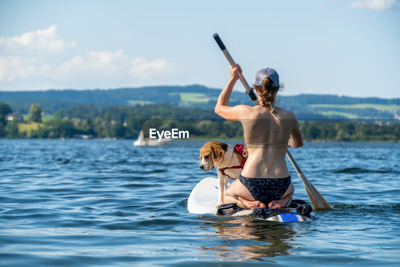 Adult woman on paddle board with male beagle, wallersee, austria.