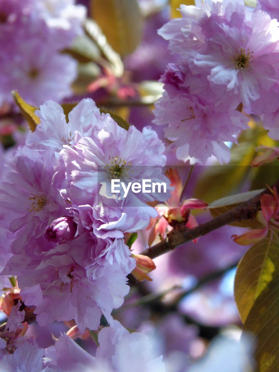 flower, blossom, growth, beauty in nature, fragility, nature, botany, springtime, stamen, spring, petal, tree, no people, freshness, branch, flower head, close-up, outdoors, day