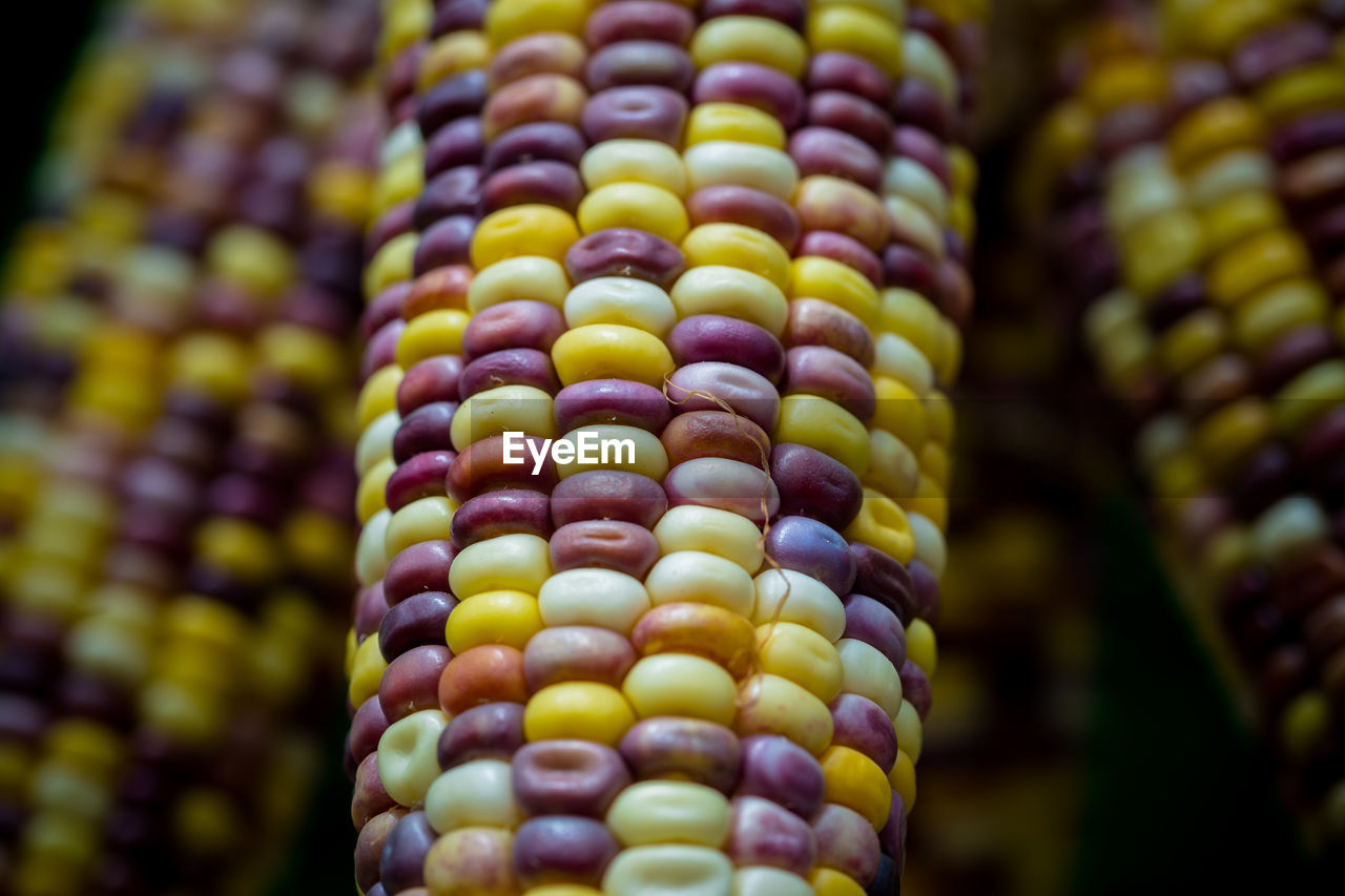 multi colored, close-up, corn, food, food and drink, no people, freshness, focus on foreground, selective focus, full frame, outdoors, in a row, day, choice, pattern, yellow, backgrounds, variation, bracelet, sweetcorn