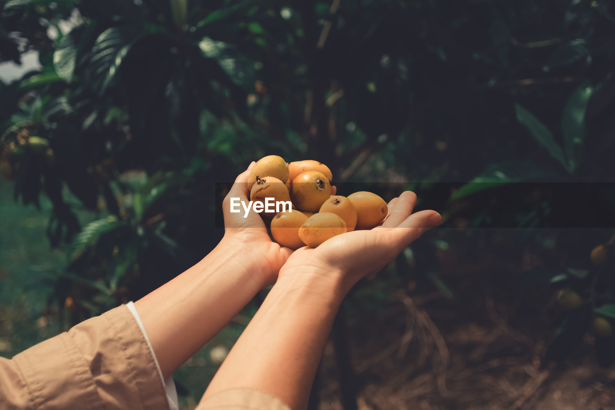 Two hands full of yellow fruits.