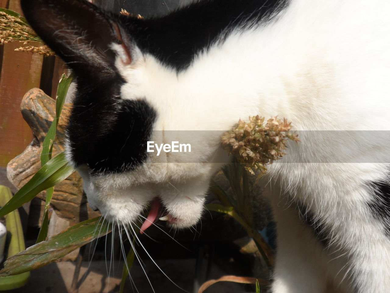 mammal, animal themes, animal, domestic animals, domestic, one animal, pets, vertebrate, cat, feline, domestic cat, close-up, no people, animal body part, focus on foreground, whisker, white color, indoors, day, animal head