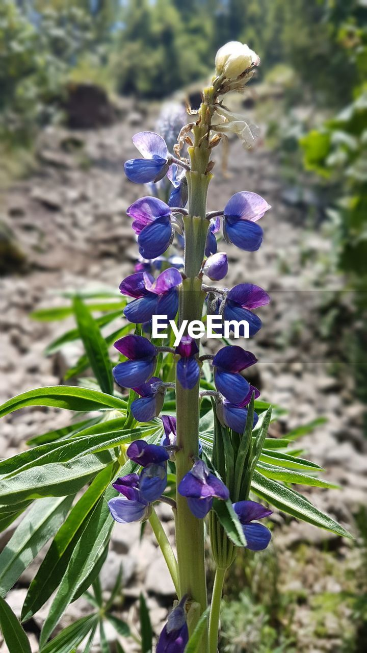 flower, purple, growth, fragility, petal, nature, beauty in nature, plant, freshness, flower head, day, outdoors, focus on foreground, no people, close-up, iris - plant, crocus