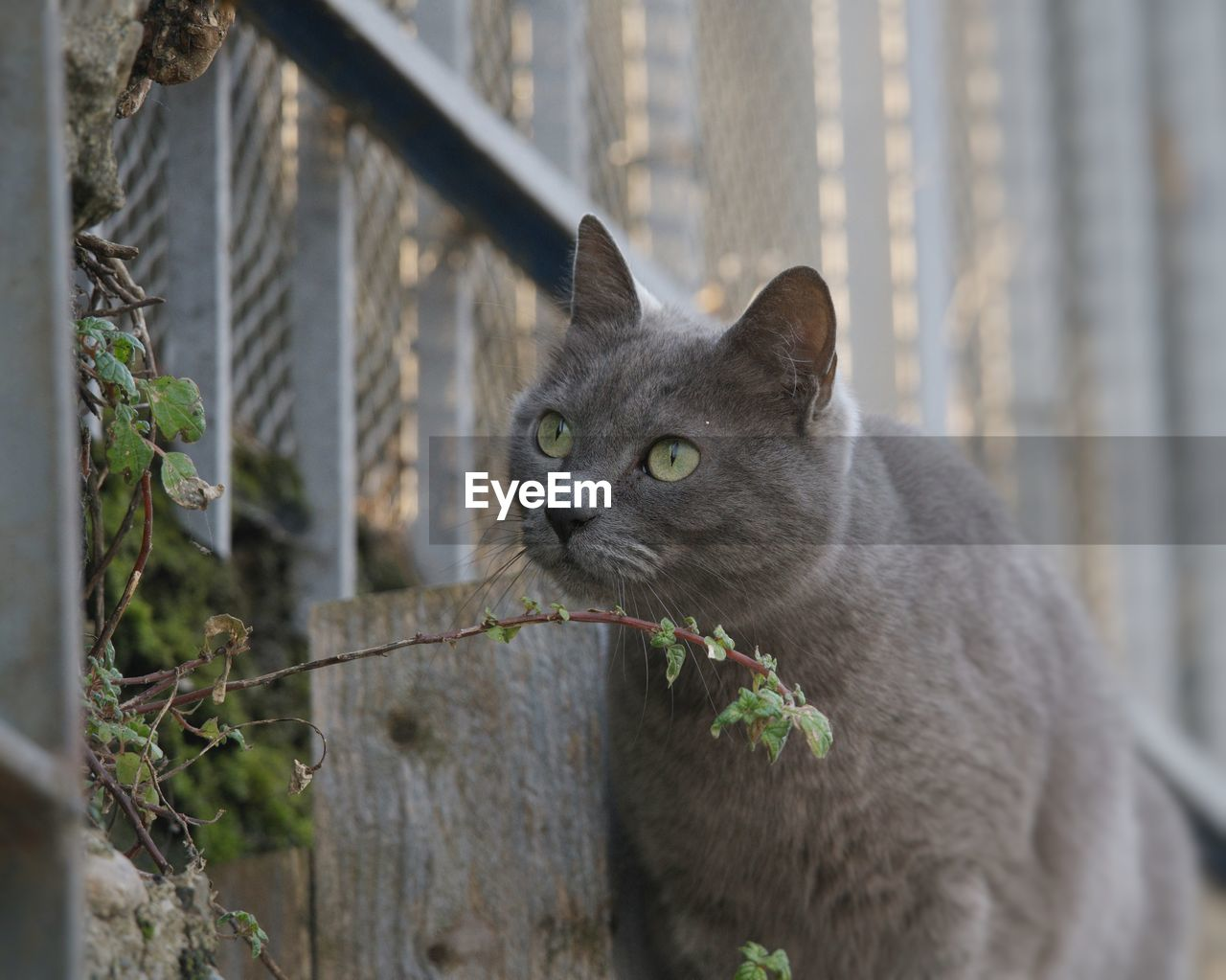 one animal, animal themes, mammal, animal, pets, domestic, vertebrate, domestic animals, feline, cat, domestic cat, focus on foreground, no people, day, built structure, whisker, looking away, architecture, plant, carnivora, outdoors, animal head, yellow eyes