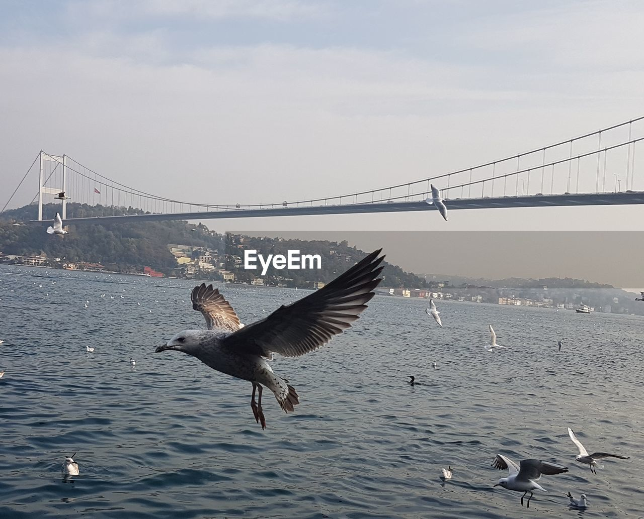 water, bird, flying, animal themes, vertebrate, animals in the wild, animal, sky, animal wildlife, bridge - man made structure, bridge, built structure, spread wings, architecture, nature, connection, suspension bridge, sea, group of animals, no people, seagull, outdoors, bay